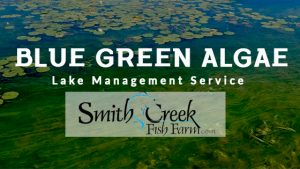 Weed And Algae Management Services